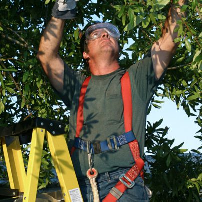 Trimming The Risk Areas From Tree Surgery